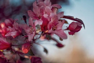 Цветение Цветы сад цветение весна боке