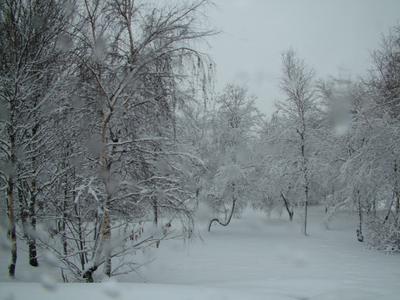 Проезжая мимо. снег деревья