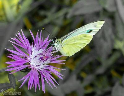 ***Бабочка и цветок*** Бабочка лето август