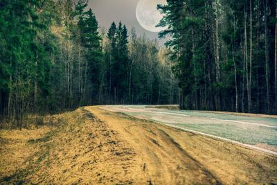 Юнтолово Юнтолово лес дорога луна природа