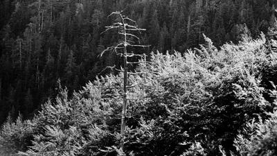 перед грозой. впечатление черногория гроза пейзаж пленка