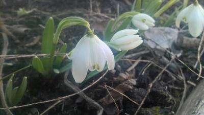 Первый  2020 2020 цветы первые природа март