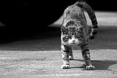 про мурзика кот