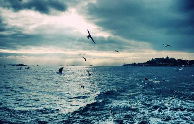 Гибралтар море чайка