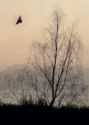 """""""Полет мысли"""" полет мысли,птица,туман"""