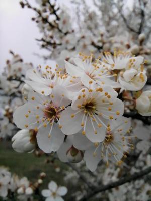 Букет из абрикосов Цветы пчела рассвет красота утро