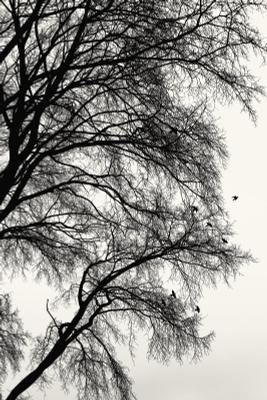 Дерево и птицы.