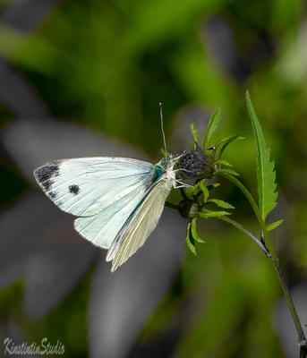 Из серии на цветке...Бабочка. на цветке бабочка осень сентябрь