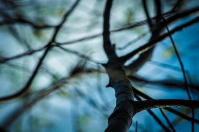 В переплетениях видимых-невидимых... небо рост свет любовь