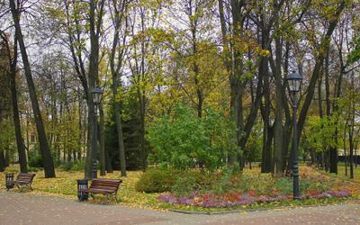 Городской осенний парк парк осень листья
