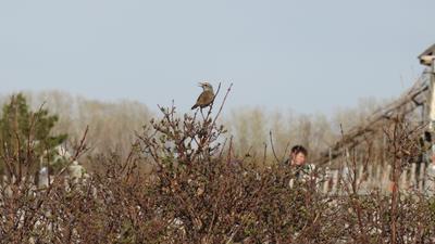 Птица птица весна куст