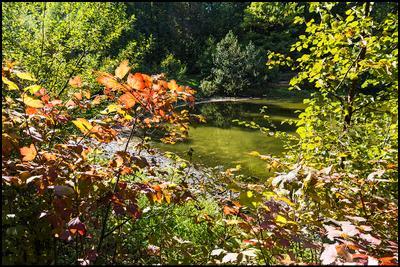 Опять про осень ! Измайловский лес