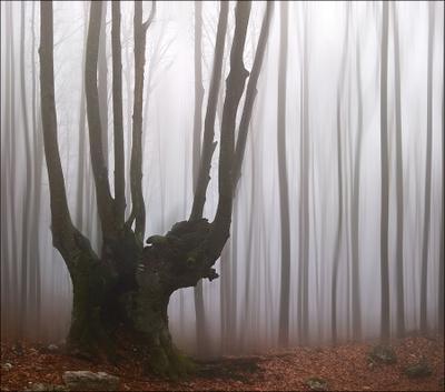 *** горы туман