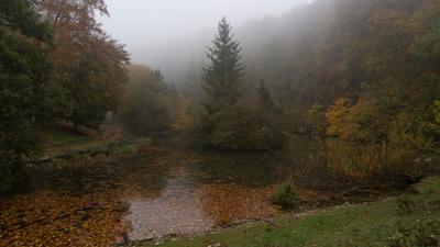 Лесное озеро лес озеро туман утро