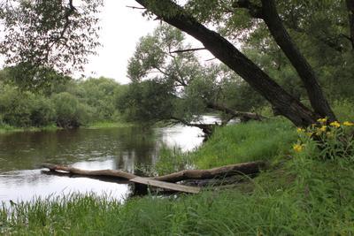 Река Птичь. река