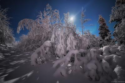 Тихая ночь ночь зима лес снег луна мороз