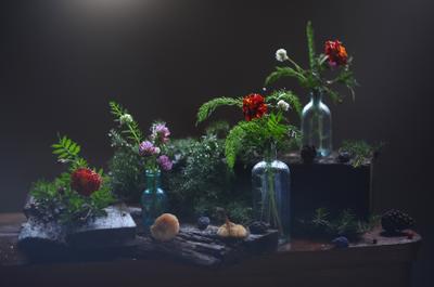 Натюрморт с поганками. бутылочки рябинка шишки можжевельник вода