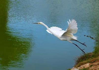 Прыжок egret цапля