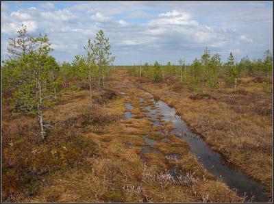 В краю вологодских болот