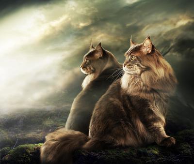 Mirror Digital Photo Art Cat World Winner Eltons Fantasies