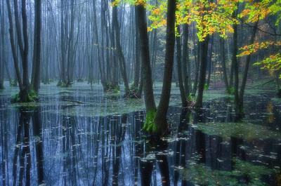 Magic Forest лес утро природа пейзаж