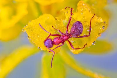 муравей муравей утро роса