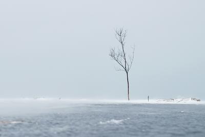 одинокий пастух Ильмень озеро позёмка дерево одиночество мороз ветер лёд