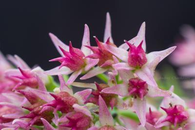 *** цветы макро очаток