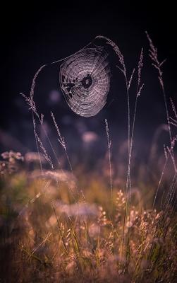 Утренних слез паутина