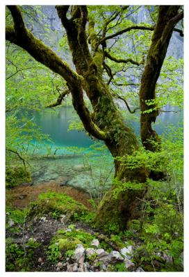 Magic forest Alps, Obersee