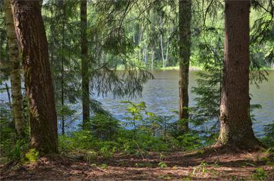 На берегу лесного озера пейзаж лето лес озеро