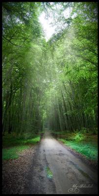 Лесная дорога...