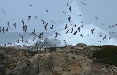 камни, птицы и вода