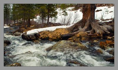 Старое дерево...вода течёт...года идут... Ручей Снег Горы