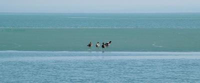 ледяная суша балатон озеро утки стоят лёд