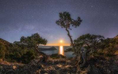 Танцы при луне Крым новый свет ночь луна можевельник март