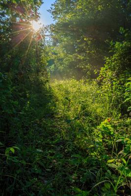 Забытой дорогой утро травы свет