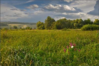 О травах луговых... луг, трава, лето