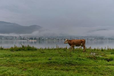 Алтайская коровка