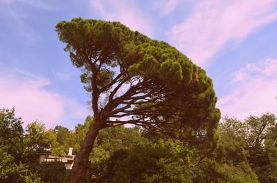 дерево дерево небо ветер
