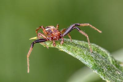 Spider паук макро canon 70d насекомые spider