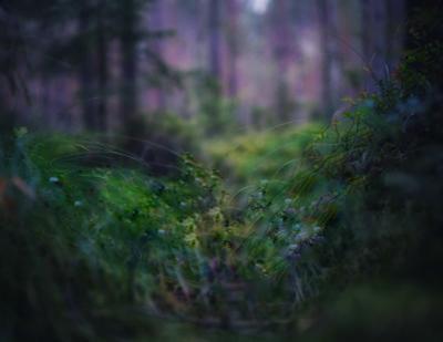 Мхи (2) лес мох лето