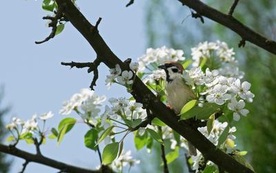 *** весна птицы