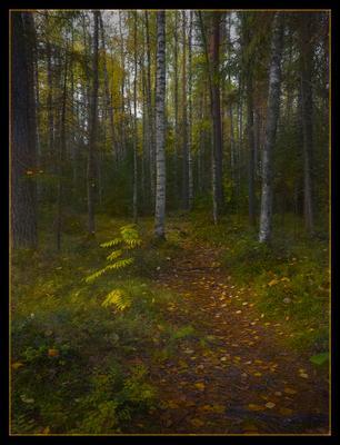 В осенний лес осень утро листопад тропинка рябинка берёза  свет