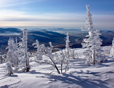 Ёлки-палки горы, снег, солнце, горная шория, сибирь, шерегеш, ёлки