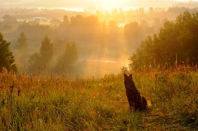 Утро Солнечное
