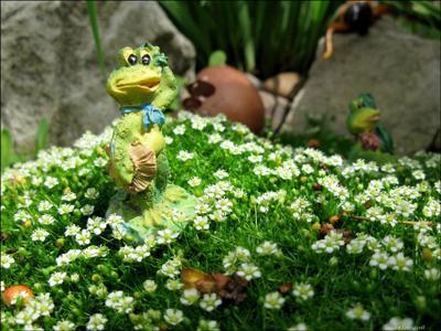 Куда я попал..? макро лягушка солнце цветы