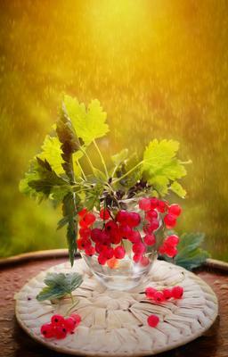 Летний этюд лето июль красная смородина роса закат