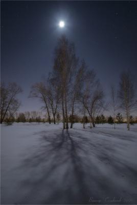 Лунная  саната 2. Луна ночь берёзы звёзды