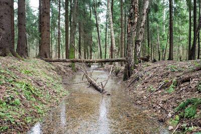 В лесу. лес деревья природа